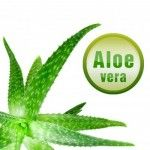 4239164 s 150x150 Welcome to Forever Living Aloe Vera Online Store. Free registration business opportunity worldwide.
