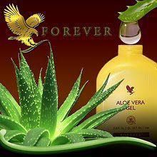 Forever Living Products largest growers and manufacturer of Aloe Vera Plants.