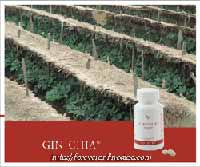 Buy Forever Gin-Chia Nutritional Supplement